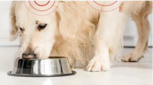 Good Doggie - anmeldelser - forum - virker det